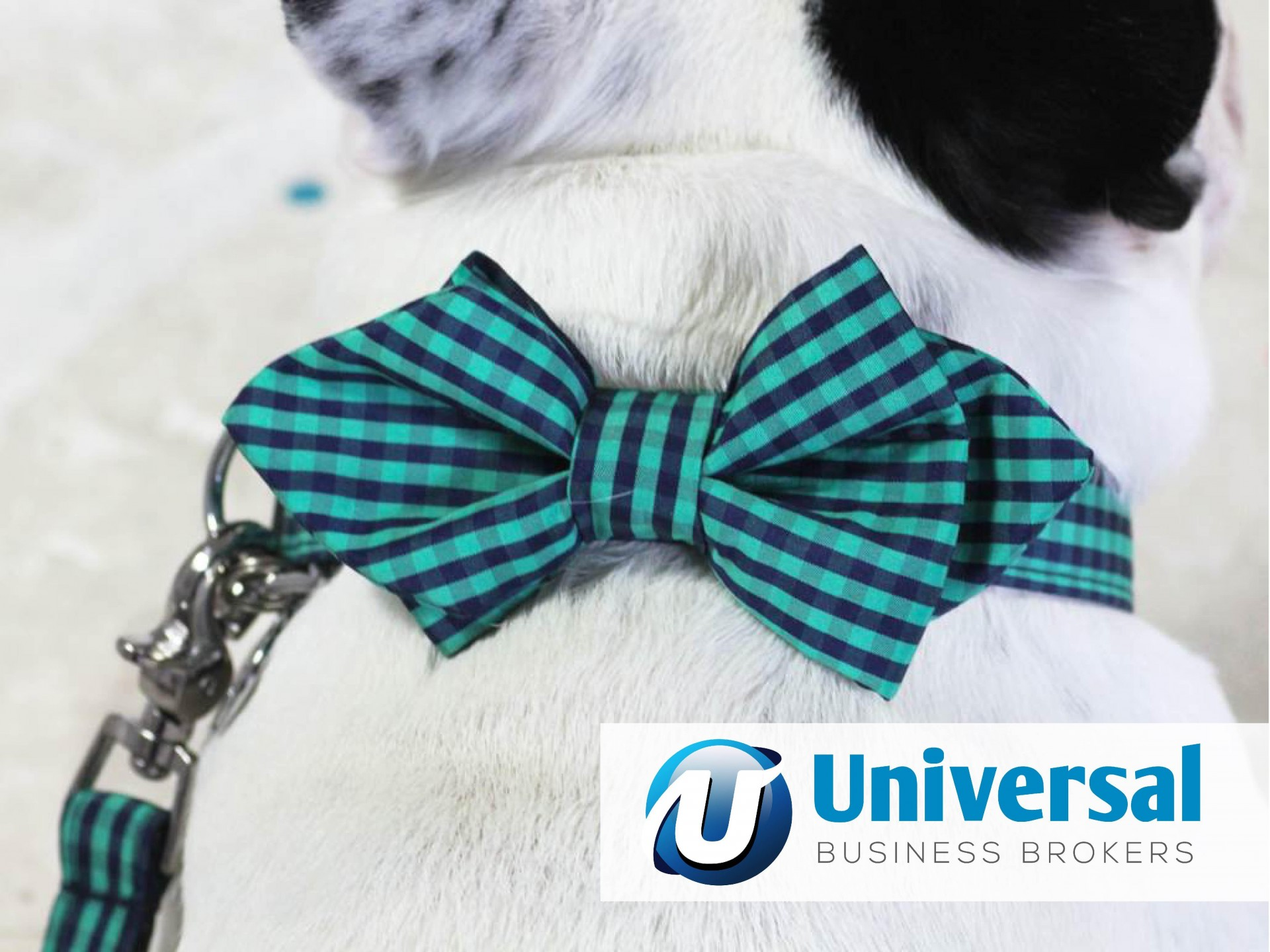 Designer pet accessories Retail and Online business for sale in Sydney