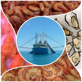 Well-Established Fresh Seafood Retail Shop For Sale - Perfect Shopping Centre