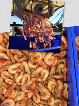 well-established-fresh-seafood-retail-shop-for-sale-perfect-shopping-centre-7