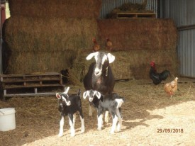 Goat- Sheep Dairy, Cheese Factory, Cheesery Cafe, New Home, Water, 135 Acres.