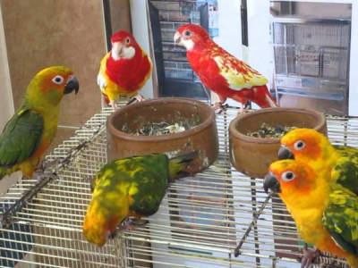 pet-shop-golden-square-4455296-0