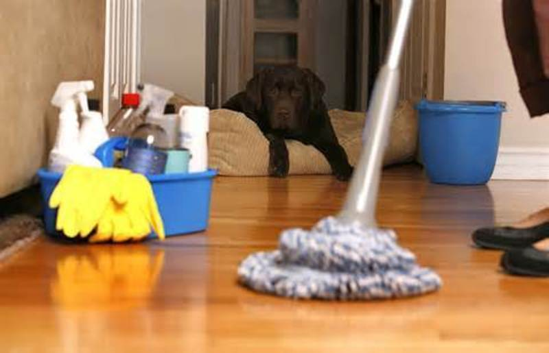 HOME CLEANING -- DONVALE -- #4261598