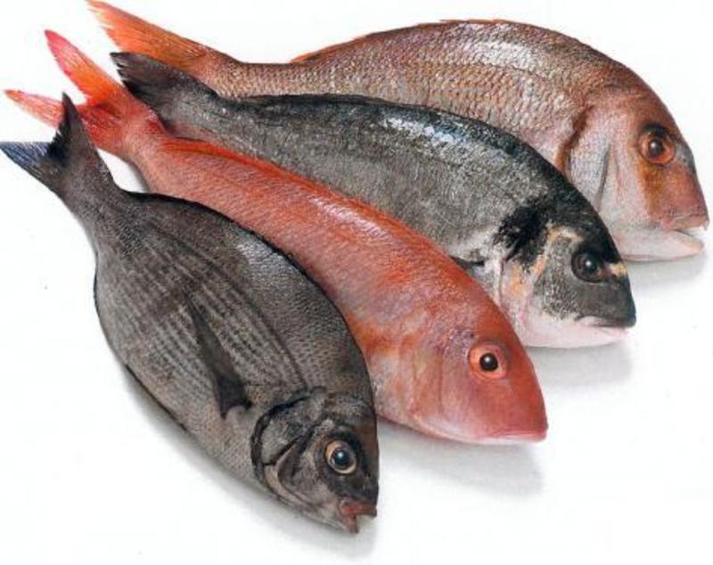 FRESH FISH -- SUNSHINE -- #4553026