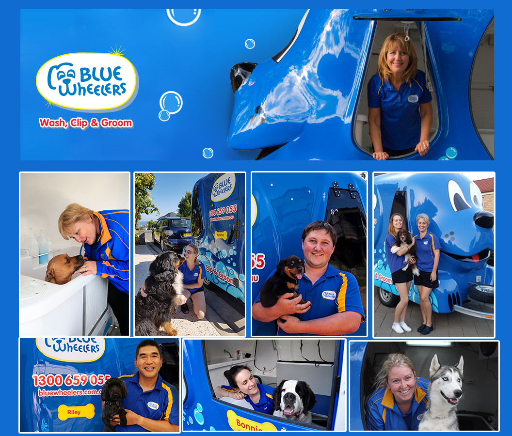 Walk into Mobile Dog Grooming opp with est. Blue Wheelers Wash Clip & Groom