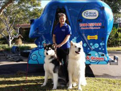 dog-lover-join-aussies-1-choice-in-dog-grooming-earn-up-to-2000-p-w-2