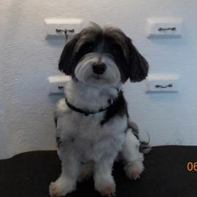 walk-into-the-belmont-established-dog-grooming-business-with-blue-wheelers-9