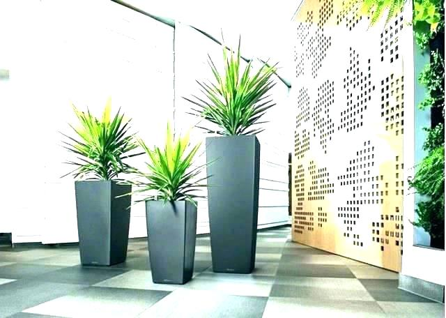 Gold Coast Based, Indoor Plant Hire Service Business