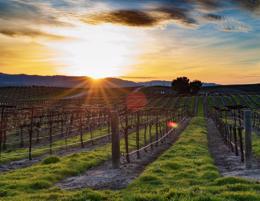 Prominent Barossa valley wines look for strategic investor!