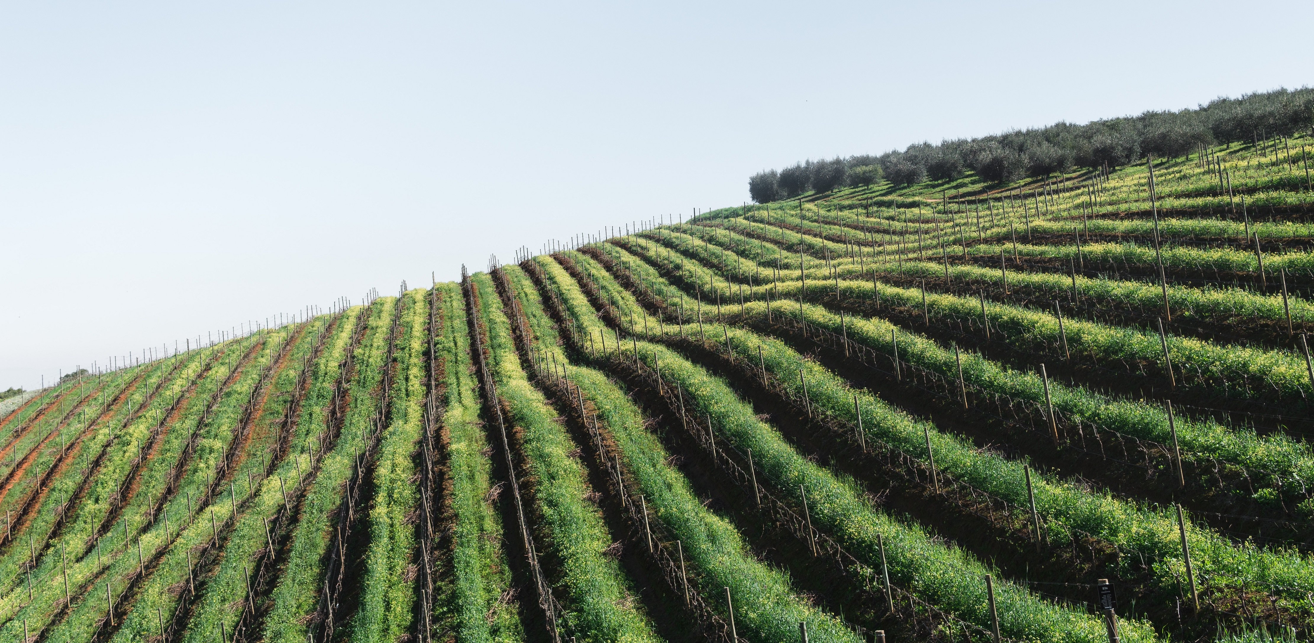 Vineyard & Wine Business For Sale