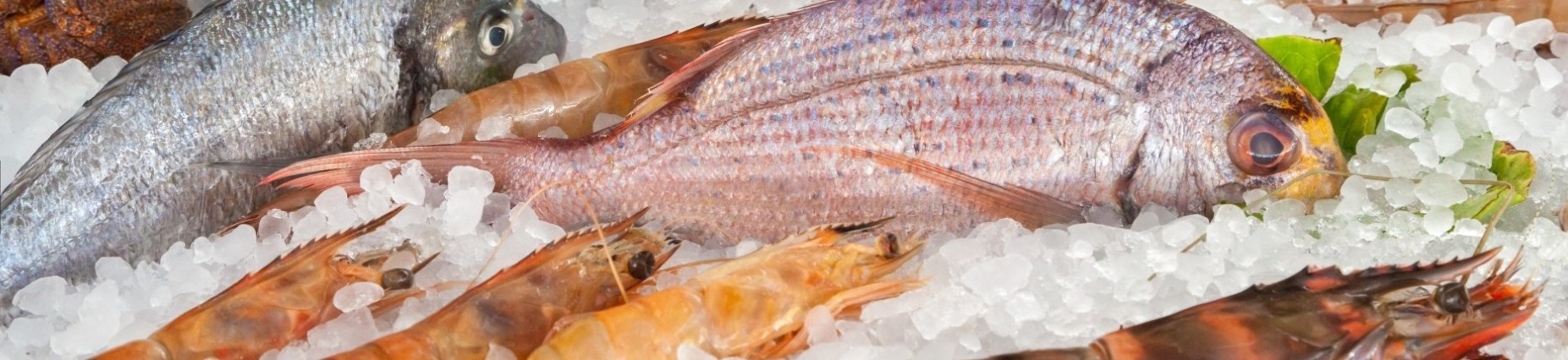 Independent Fresh Seafood and Hot Food Retail Shop – Brisbane Northside QLD