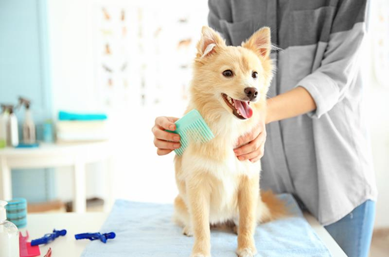 18227-profitable-dog-daycare-and-grooming-business-1