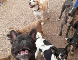 Paws2play is a wonderful, renowned dog training and daycare centre.