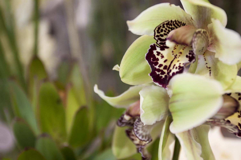 gorgeous-florist-in-the-heart-of-manuka-manuka-flowers-4