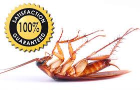 leading-pest-management-from-24-950-best-value-in-australia-1