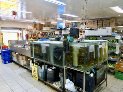 extremely-high-profit-seafood-shop-in-beechboro-for-sale-4