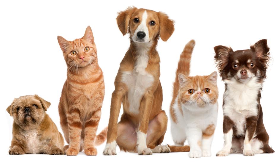 import-distribution-wholesale-online-retail-of-unique-pet-products-1