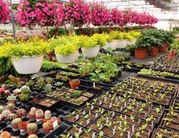 Nursery Florist & Cafe Business For Sale
