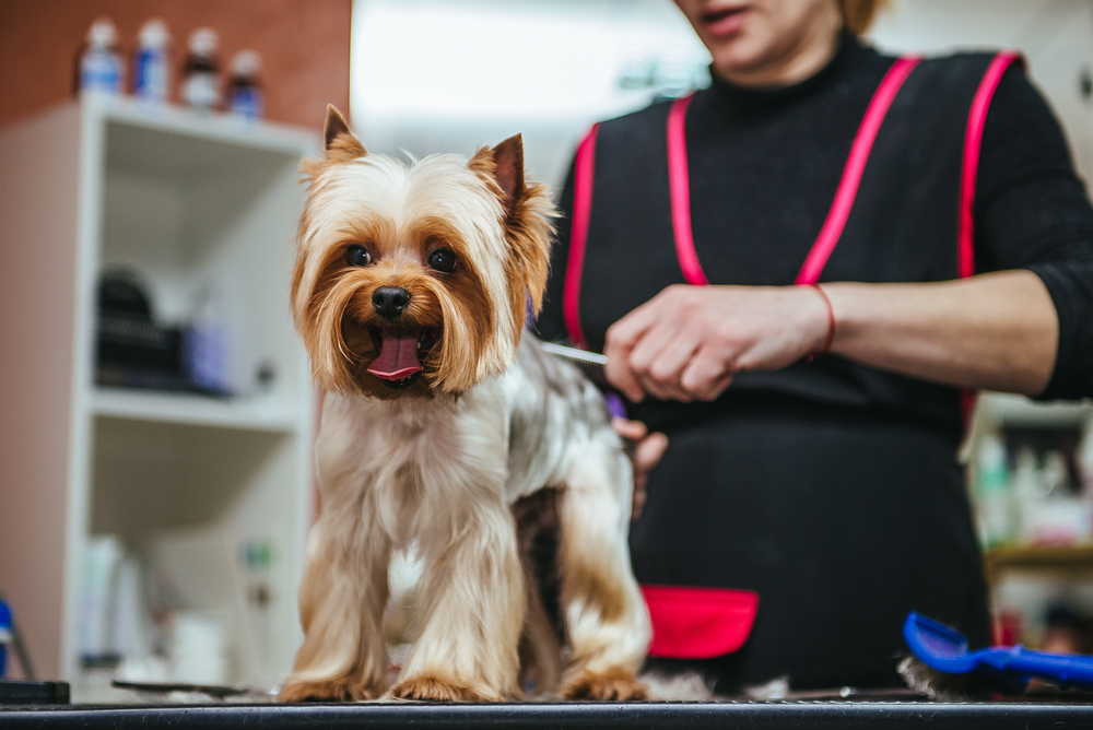 Dog Grooming Business for Sale Prahran