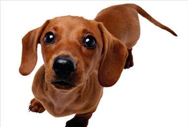 Price Negotiable - -Pet Shop - make $$$  (Northern Melbourne) LIF6703