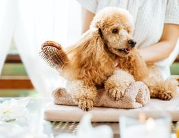 Dog Daycare & Grooming Business