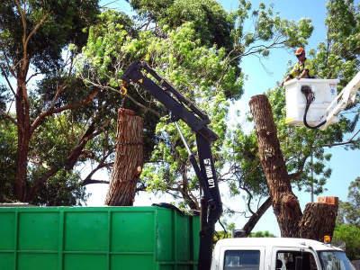 treescape-professional-tree-services-575-000-15346-2