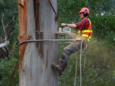 treescape-professional-tree-services-575-000-15346-1