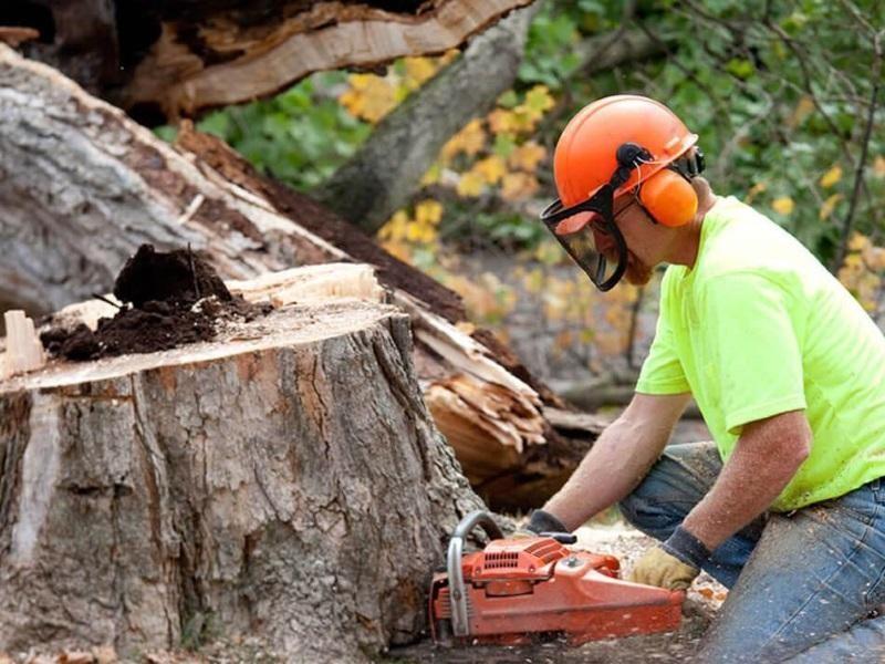 TREE LOPPING $950,000 (14733)