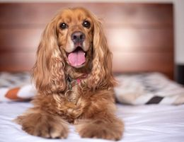 Mobile Pet Care Services Business  Canberra, ACT