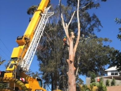 extremely-profitable-tree-services-business-for-sale-central-coast-nsw-2