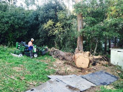 extremely-profitable-tree-services-business-for-sale-central-coast-nsw-0