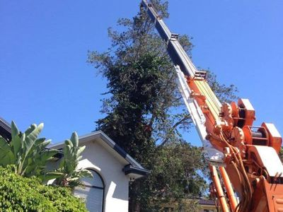 extremely-profitable-tree-services-business-for-sale-central-coast-nsw-3
