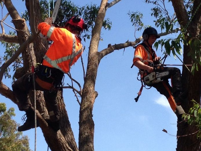 extremely-profitable-tree-services-business-for-sale-central-coast-nsw-1