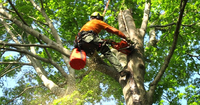 market-leading-tree-service-mulch-and-firewood-supplier-for-sale-central-coas-0