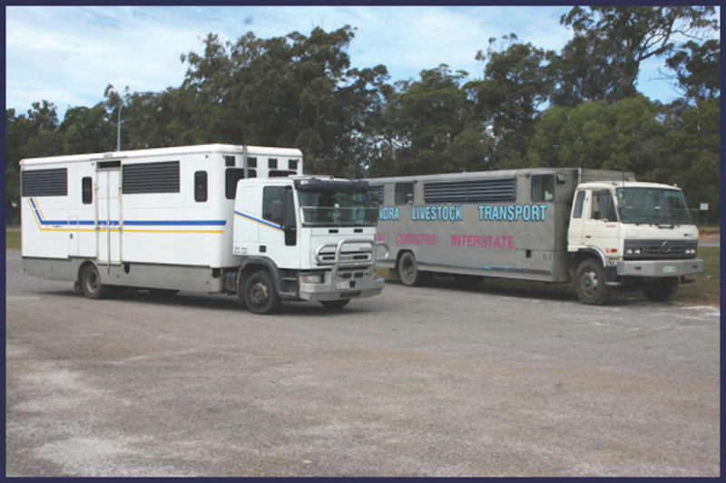 Well Known Horse Transport Business  Sunshine Coast, Qld