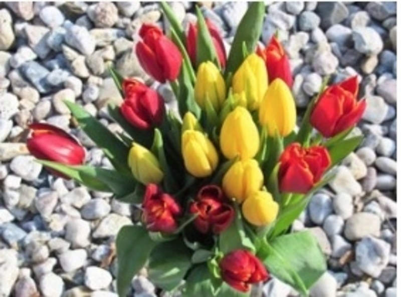 Iconic Retail Florist For Sale - Central Coast NSW