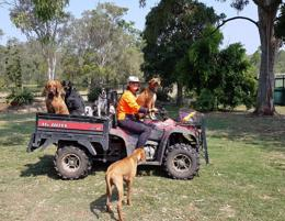 Growing Dog Day Care and Boarding Business servicing North Brisbane