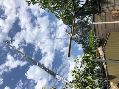 tree-removal-business-for-sale-3