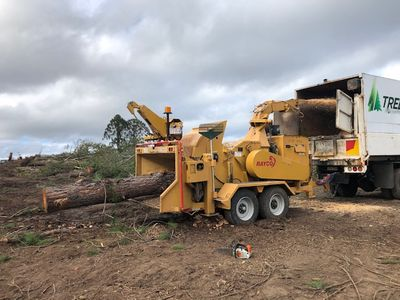 tree-removal-business-for-sale-0