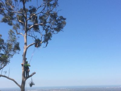 tree-removal-business-for-sale-8