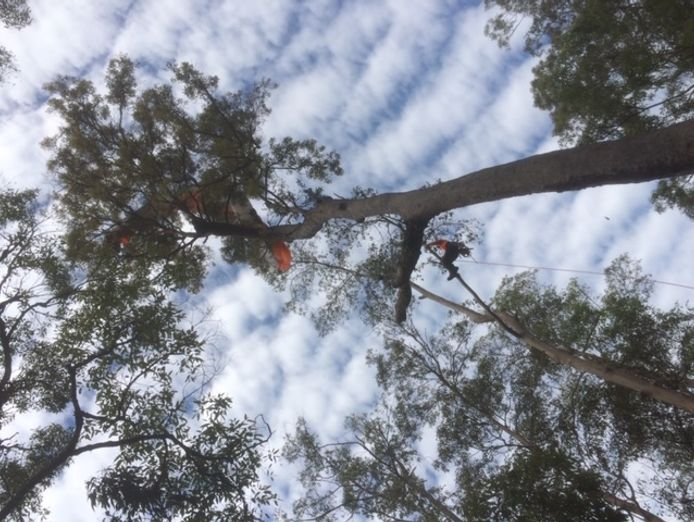 tree-removal-business-for-sale-6
