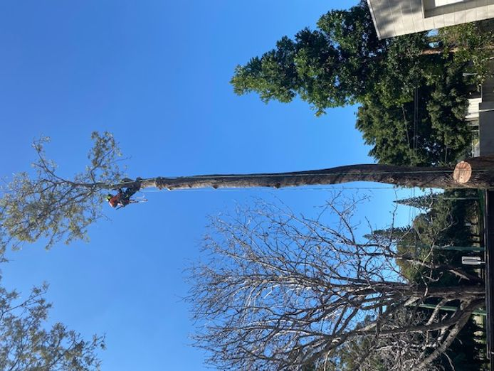 tree-removal-business-for-sale-1