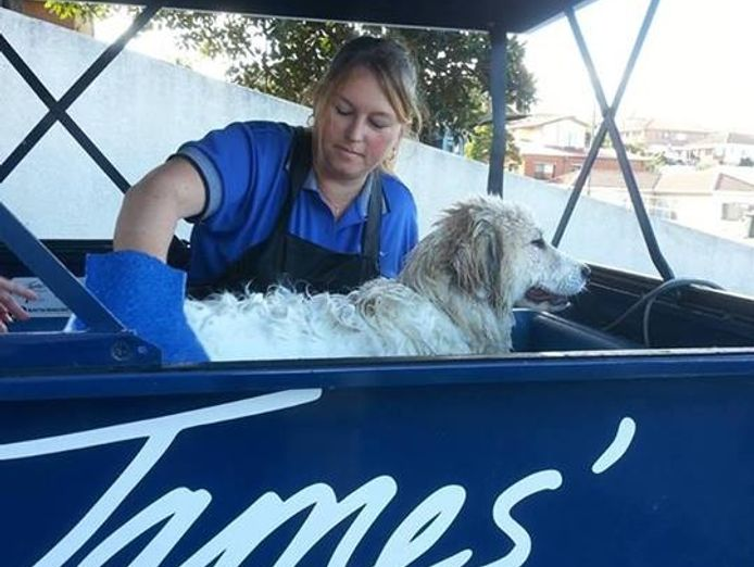 love-dogs-want-to-work-for-yourself-pet-dog-grooming-mobile-franchise-4