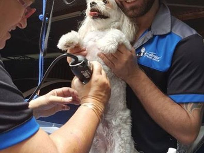 love-dogs-want-to-work-for-yourself-pet-dog-grooming-mobile-franchise-7