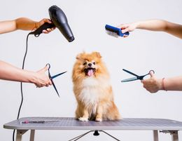 Well Established and Very Profitable Dog Grooming and Day Care Salon