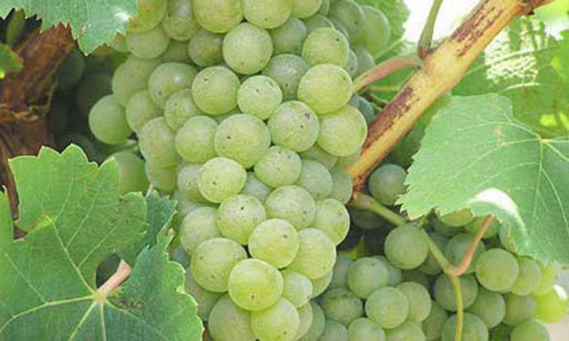 Winery/Vineyard in Yarra Valley - Ref: 10911