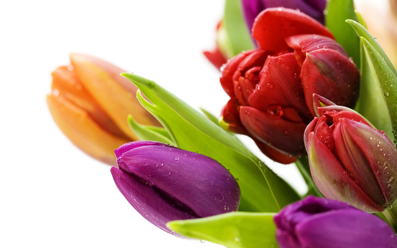 Florist Near Oakleigh - Ref: 11025