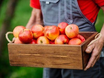 huge-fruit-amp-vegetable-warehouseref-10046-1