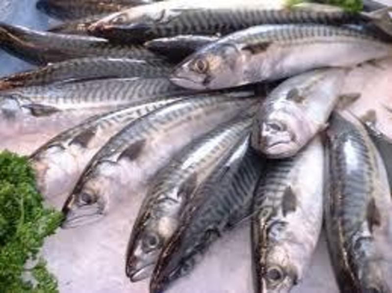 Fresh Fish and Seafood Near Moorabbin - Ref: 16510