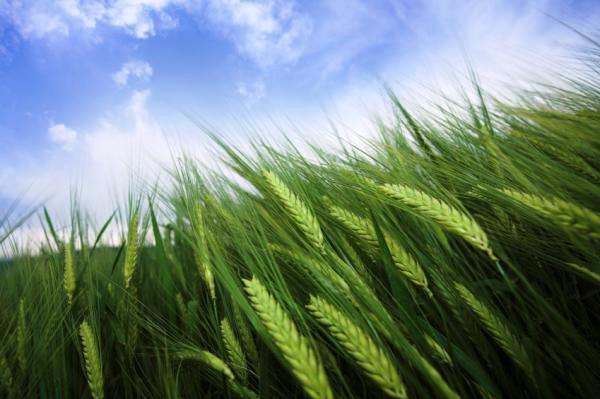 Farmland (Grains)  Ref: 5590