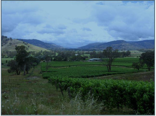 Naretha Vineyard Upper Murray Estate (GLJ0165)